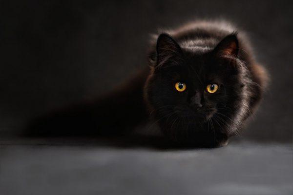 Eine Wurmkur für Katze